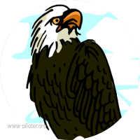 Leader, l'aigle