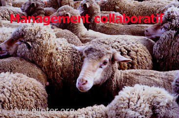 Le management collaboratif