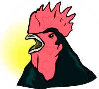 Promoteur : le coq